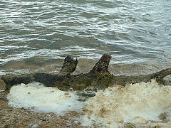 image of a log on the shoreline at Rutland Water